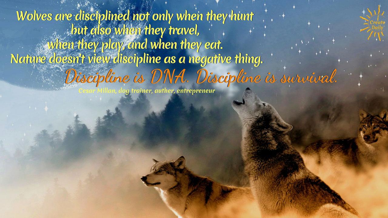 Discipline is DNA of Survival