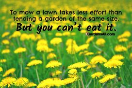 To Mow a Lawn Takes Less Effort than Tending a Garden