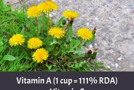 Dandelions Greens Nutrition