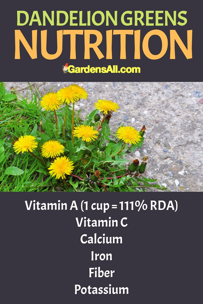 Dandelions Greens Nutrition