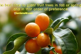 The Best Time to Plant Fruit Trees