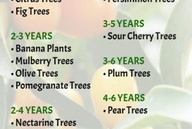 Fruit Tree Bearing by Years