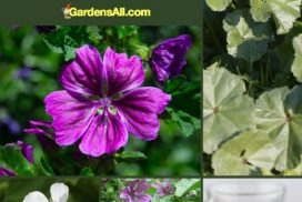 Marsh Mallow Plant a Return to Edible and Medicinal Roots