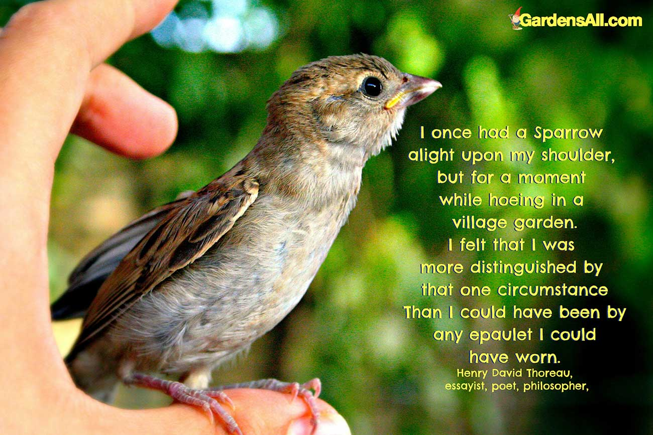 I Once Had a Sparrow Alight Upon My Shoulder