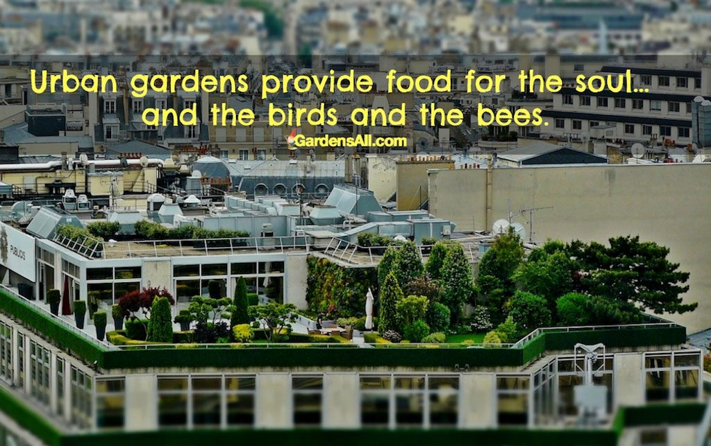 Urban Garden Provides Food for the Soul