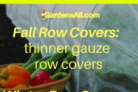 Row Cover Tips for Winter Vegetables