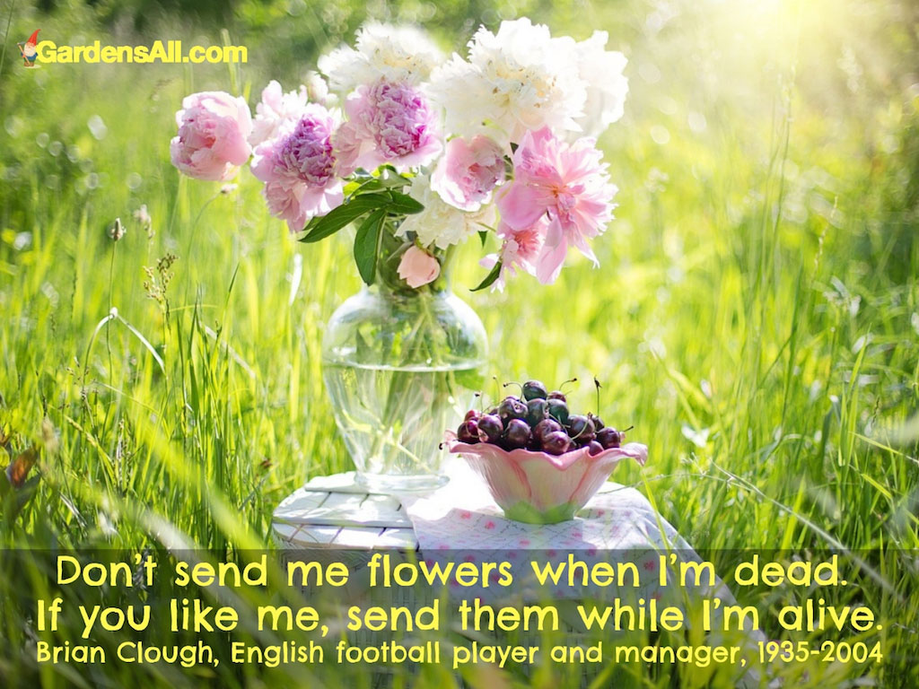 Send Me Flowers When I'm Alive