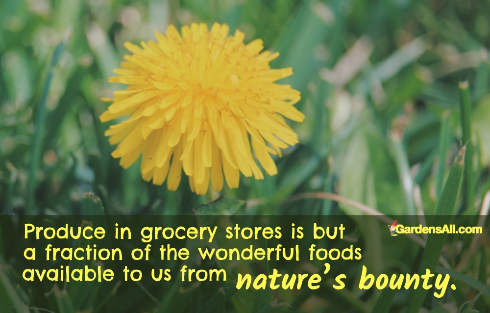 Nature's Bounty Also Produce in Grocery Stores