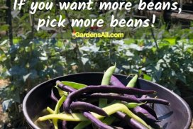 Bring On the Beans!
