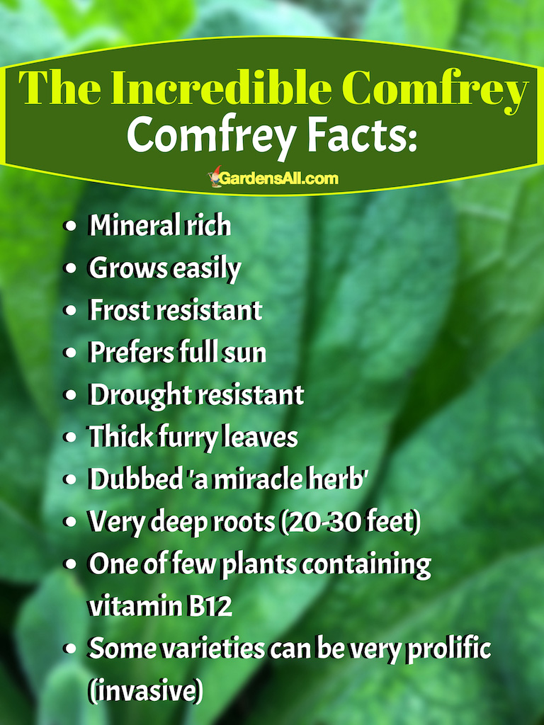 The Incredible Comfrey