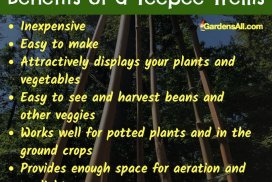 Benefits of a Teepee Trellis