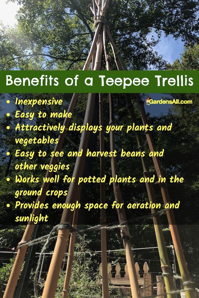 Benefits of a Teepee Trellis