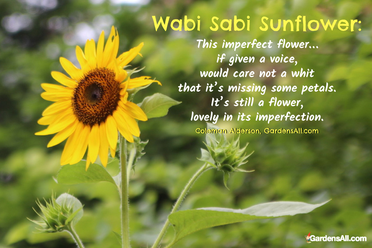 Wabi Sabi Sunflower