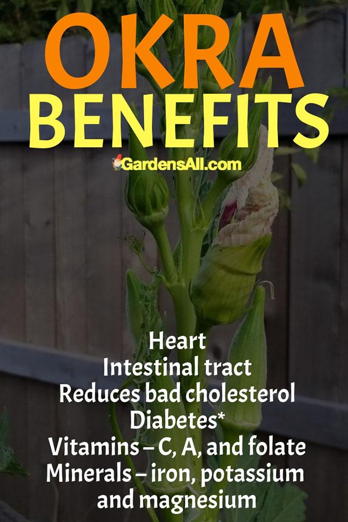 Benefits Of Okra