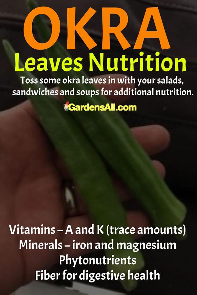 Okra Leaves Nutrition