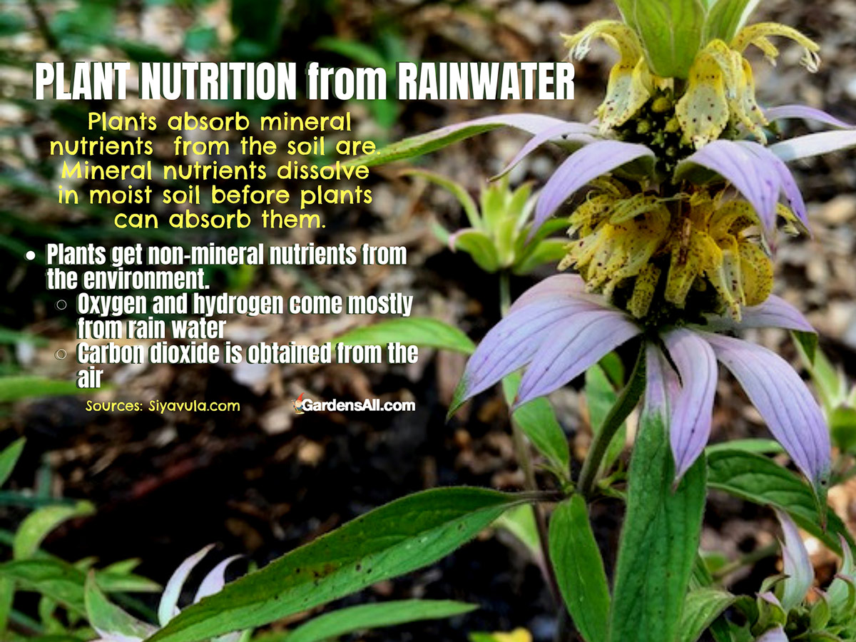 Plant Nutrition From Rainwater