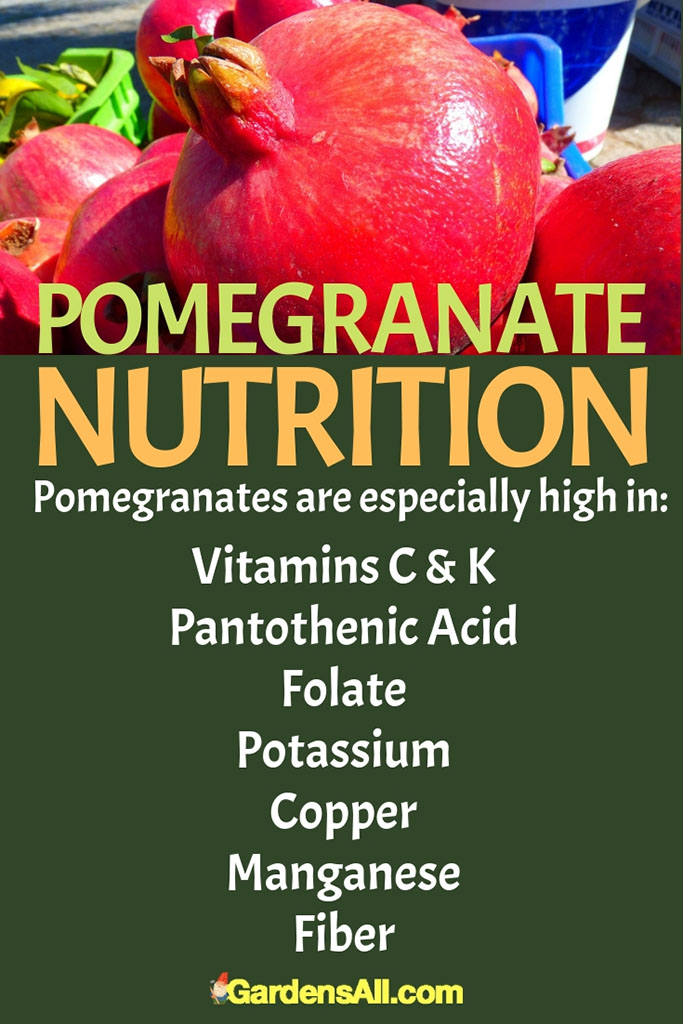 Nutrition Of Pomegranate