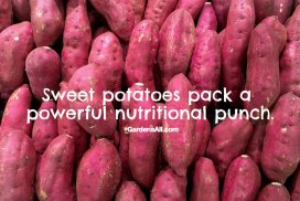 Sweet Potatoes Pack A Powerful Nutritional Punch