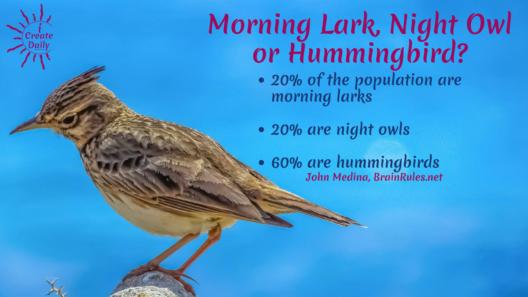 Morning Person or Night Owl? 60% of the population are hummingbirds. What?!? That's a new one! #MorningLark #NightOwl #Hummingbird #MostCreativeTime #GoalSetting #DailyGoals #MorningRoutine #WakeUpEarly