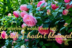No rosebush would ever say, 'I wish I hadn't bloomed... it was easier just putting out leaves.'